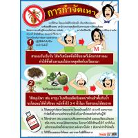 Head Lice Treatment Posters EP144