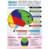 Human Brain Structure Educational Posters EP160