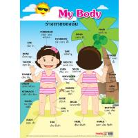 Bilingual Thai English My Body Educational Posters EP162