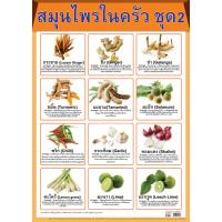 List of Culinary Herbs and Spices Set 2 Paper Posters EQ085