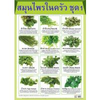 List of Culinary Herbs and Spices Set 1 Paper Posters EQ084