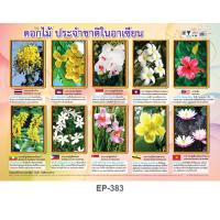 ASEAN Flower Educational Posters EP383