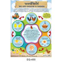 The Life Cycle of a Chicken Paper Posters EQ455