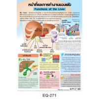 Functions of the Liver Educational Paper Posters EQ-271