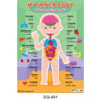 My Internal Organs Paper Posters EQ481
