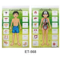 My Body and Organs Flash Cards ET-568