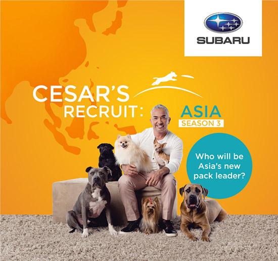 ซีซาร์ มิลลาน,Cesar's Recruit Asia,สุดยอดนักฝึกสุนัข