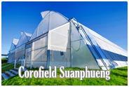 Corofield Suanphueng : โคโรฟิลด์ สวนผึ้ง
