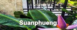 สวนผึ้ง : Suanphueng