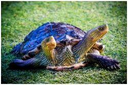 Monsters Aquarium Pattaya : มอนสเตอร์ อควาเรี่ยม พัทยา