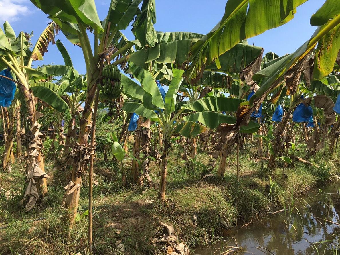 'กรมเจรจาฯ' จัดให้ความรู้เกษตรกรใช้ประโยชน์จาก FTA ประสบความสำเร็จ