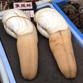 หอยงวงช้าง เมนูเด็ด ราคาแพง