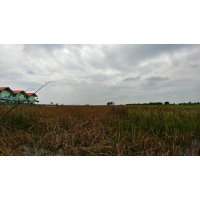 Land 15-2-89 rai in Bang Pa-In Ayutthaya for sale