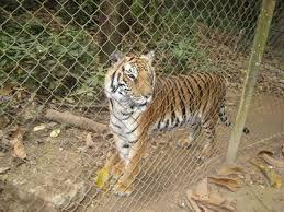 ลวดตาข่ายทำกรงเสือ