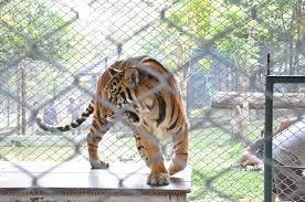 ตาข่ายลวดสานกันเสือ