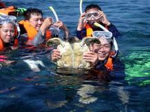 เต่าทะเล ที่ หมู่เกาะสุรินทร์