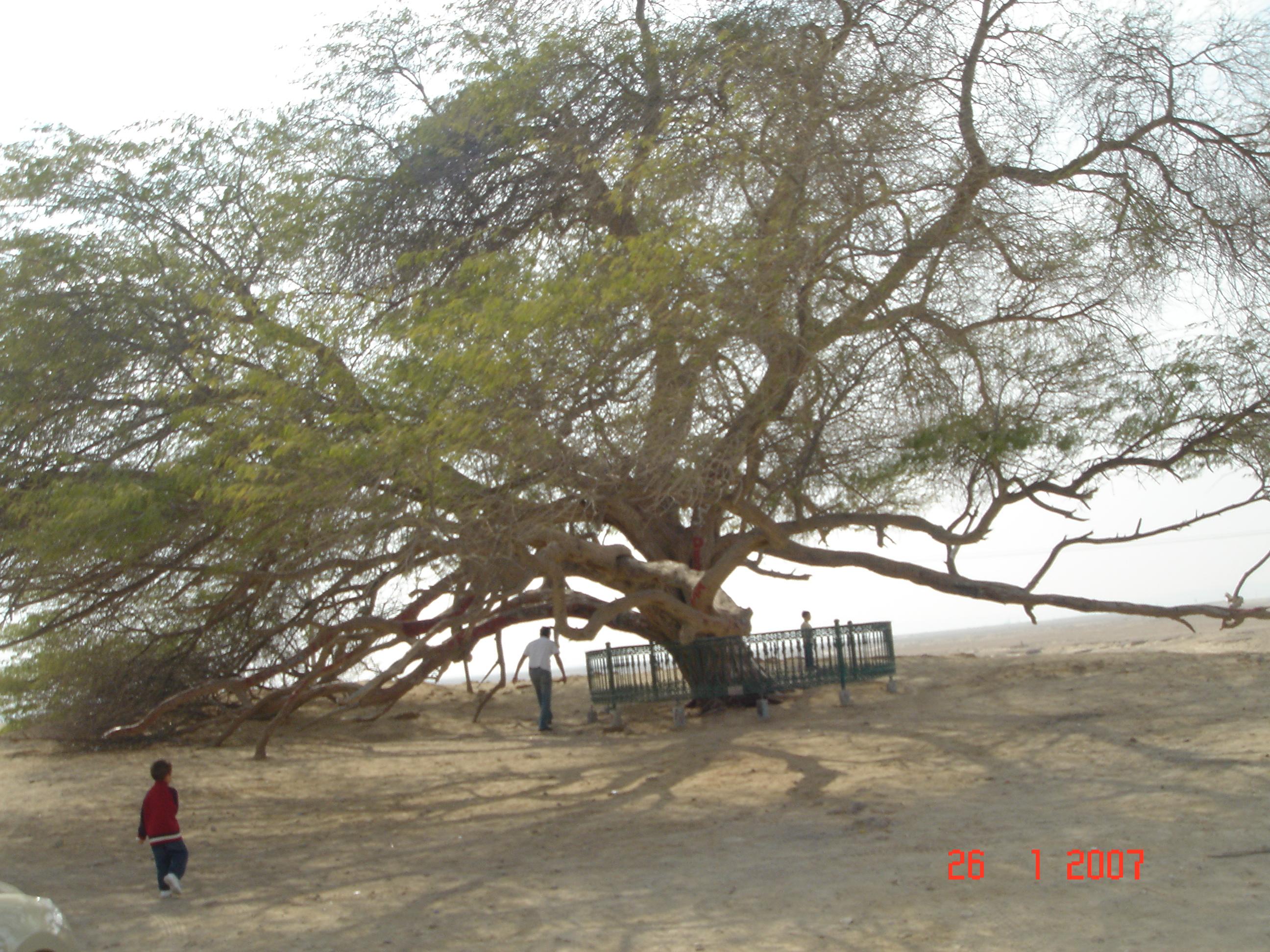ต้นไม้แห่งชีวิต Tree of Life