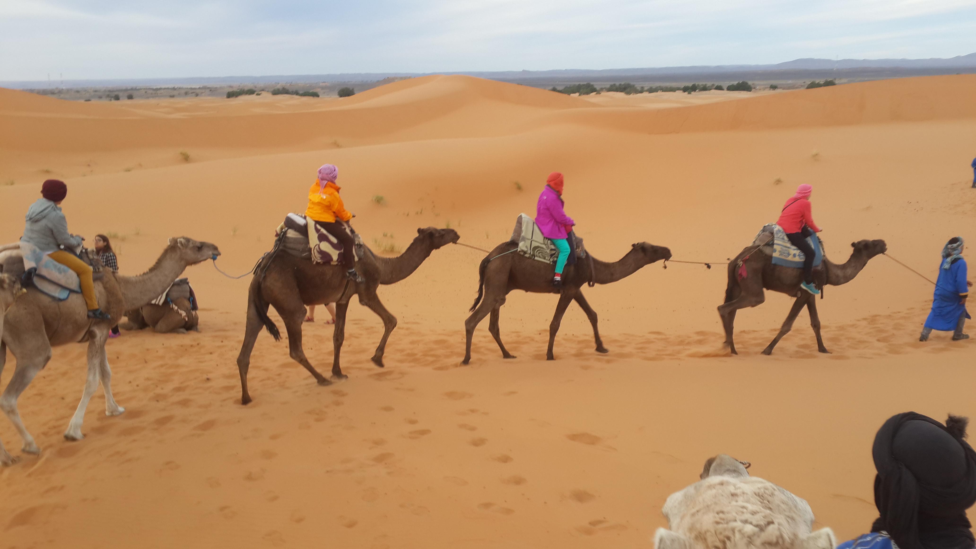 ขี่อูฐ ในทะเลทรายซาฮาร่า