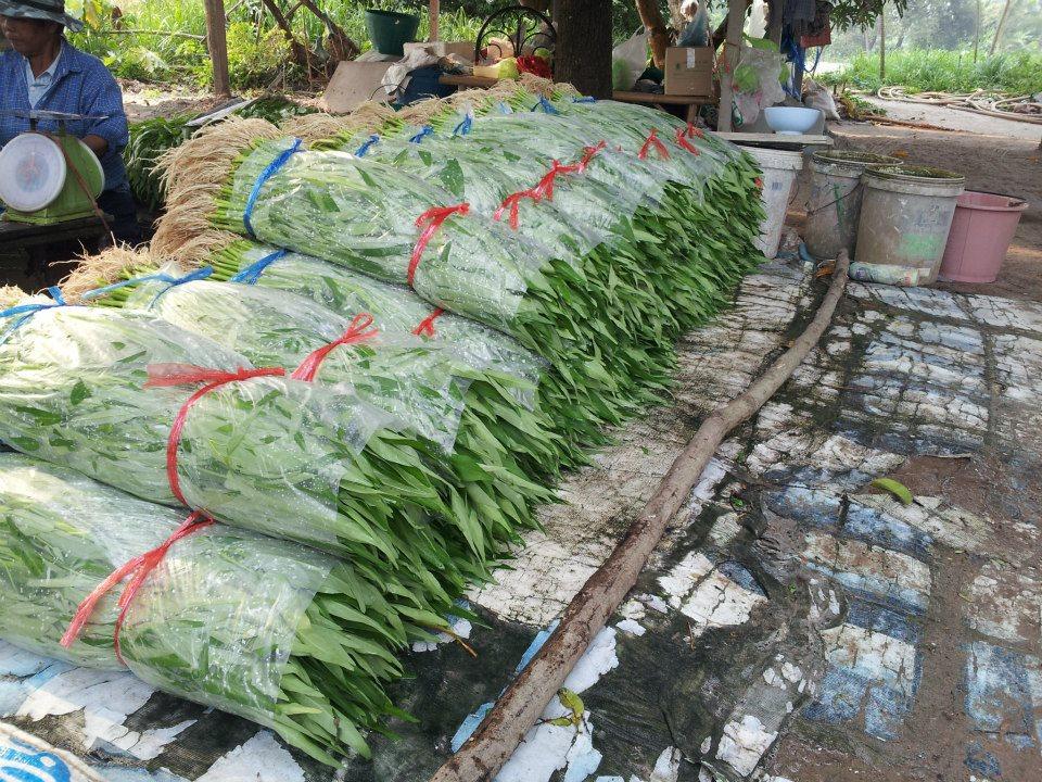 จำหน่ายผักบุ้งจีน