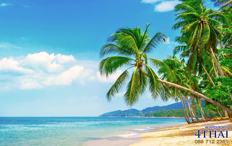 ชายหาดเขตร้อน