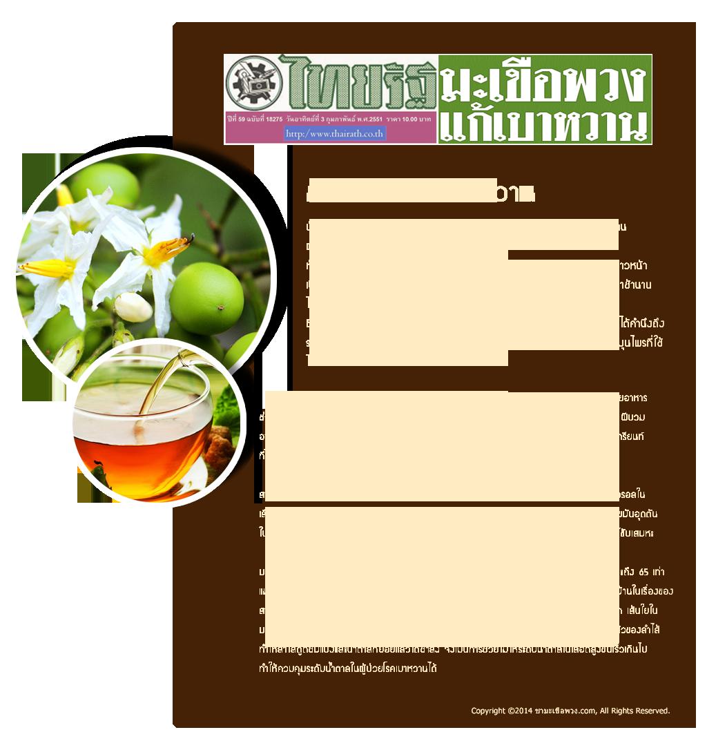 ชามะเขือพวงบีวีพลัส-ข่าวไทยรัฐชามะเขือพวงแก้เบาหวาน