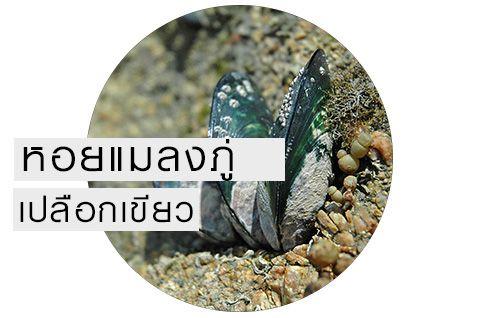 หอยแมลงภู่่นิวซีแลนด์  หอยแมลงภู่เปลือกเขียว  ช่วยบำรุงข้อต่อ  กระดูก ไขข้อ  เพิ่มน้ำหล่อเลี้ยงข้อ